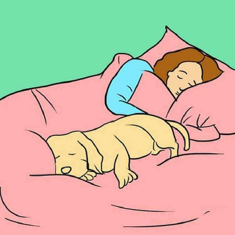 Щенок не спит ночью. что делать?