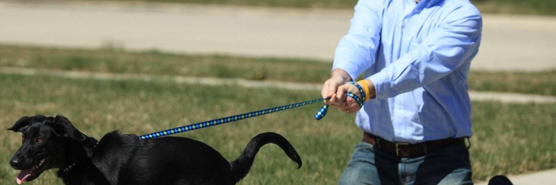 Собака одна дома: как приучить собаку оставаться одной и отучить лаять и скулить