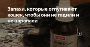 Какой запах не любят кошки больше всего, чем отпугнуть кота, чтобы он не гадил где попало?