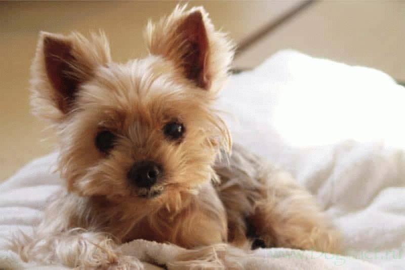 Собаки для квартиры: с кем комфортно ужиться?