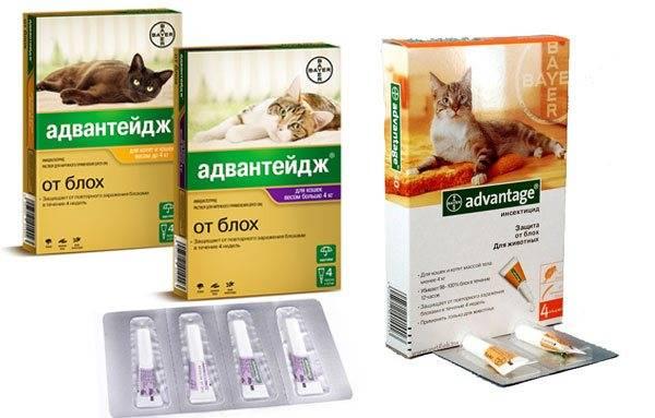 Капли адвантейдж: эффективное средство в борьбе с блохами. advantage капли от блох для кошек