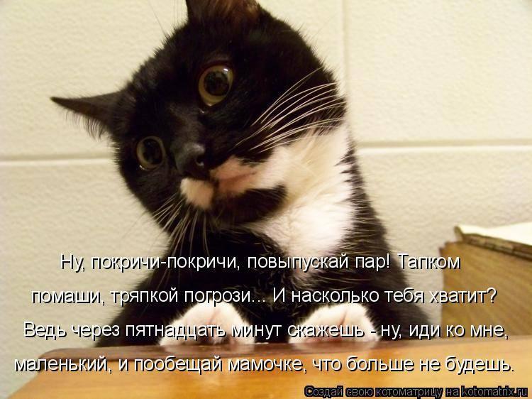 Почему кошка просит не ест. почему кошка постоянно просит есть: причины, орёт и требует еду