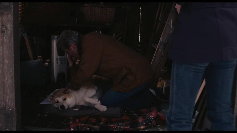 Порода собаки из фильма «хатико» и всё о породе акита-ину