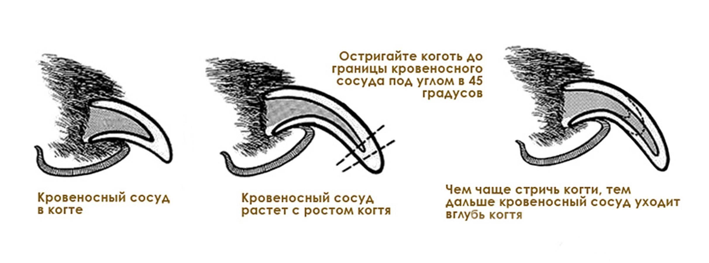 Для чего предназначены усы у собак: разрешается ли подстригать их