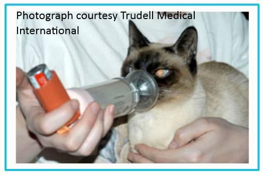 Астма у кошек - симптомы и лечение