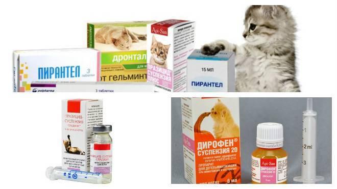 Как вылечить диарею у кота – эффективные способы