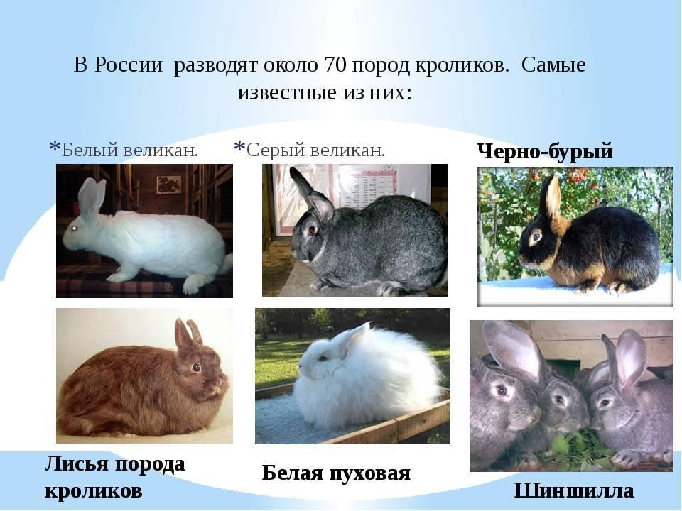 Продолжительность жизни декоративных кроликов