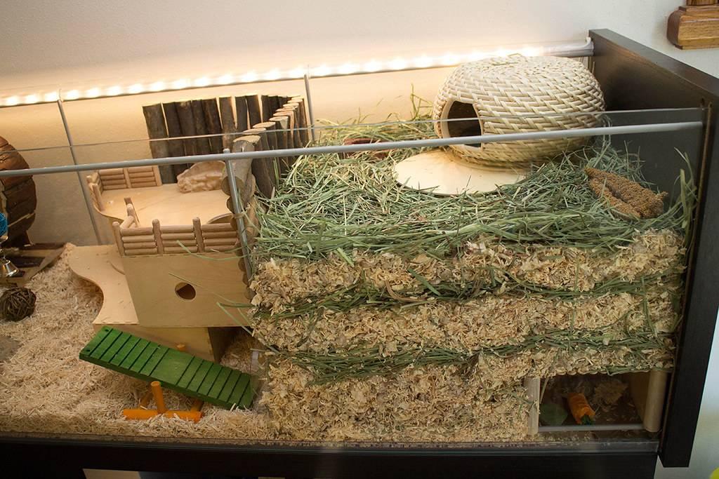 Как сделать для морской свинки домик-клетку по размерам своими руками?