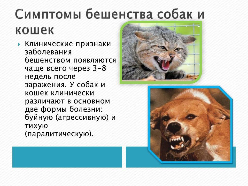 Признаки бешенства у человека после укуса собаки