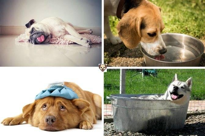 Как помочь собаке в жару: 12 способов