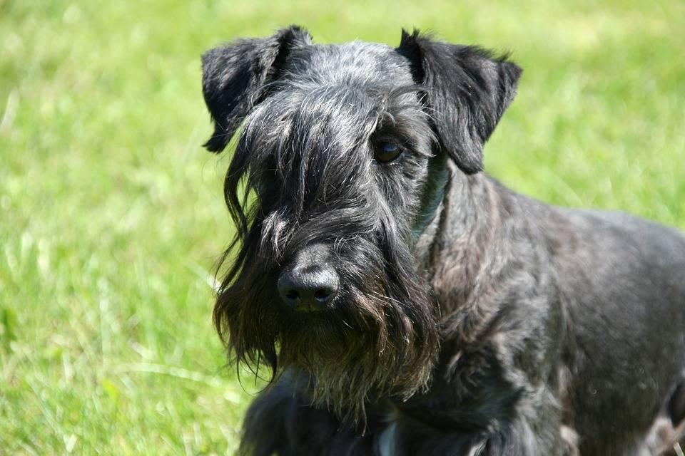 Выбираем домашнего питомца: чешские породы собак и кошек