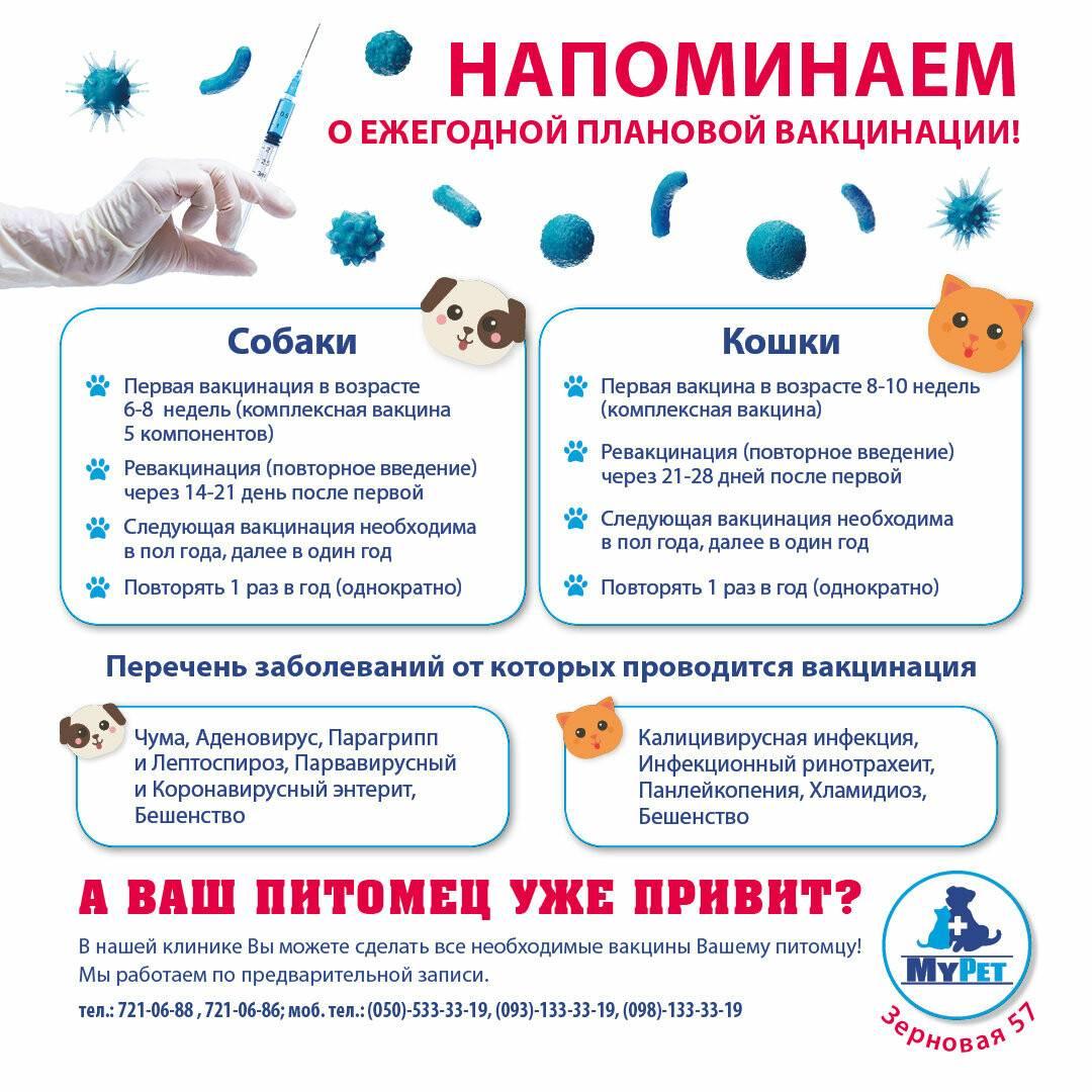 Через сколько дней можно делать прививку собаке после глистогонк? - отвечает  ветврач