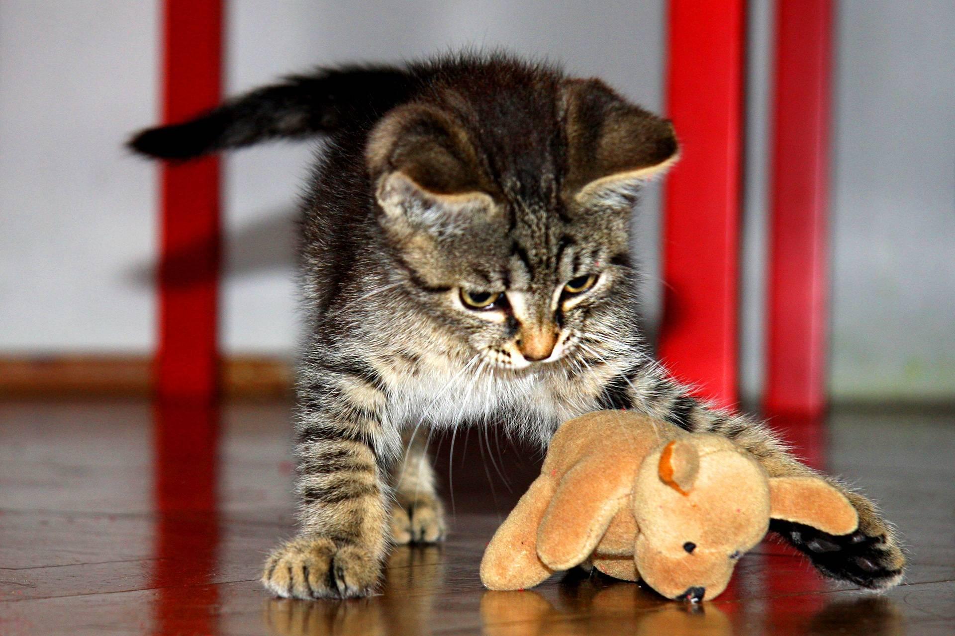 Как узнать, играют мои коты или дерутся?