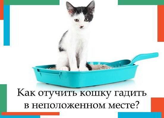 Как отучить кота гадить в неположенном месте: методы воспитания