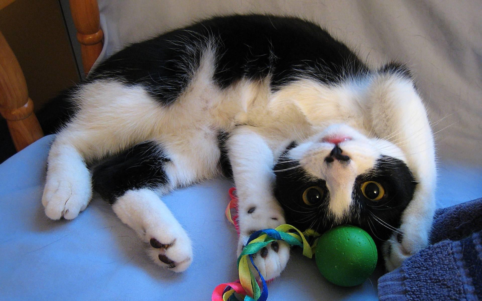 Игры с кошками. играем с кошкой дома