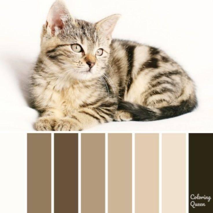 Окрасы кошек » kuguarlend