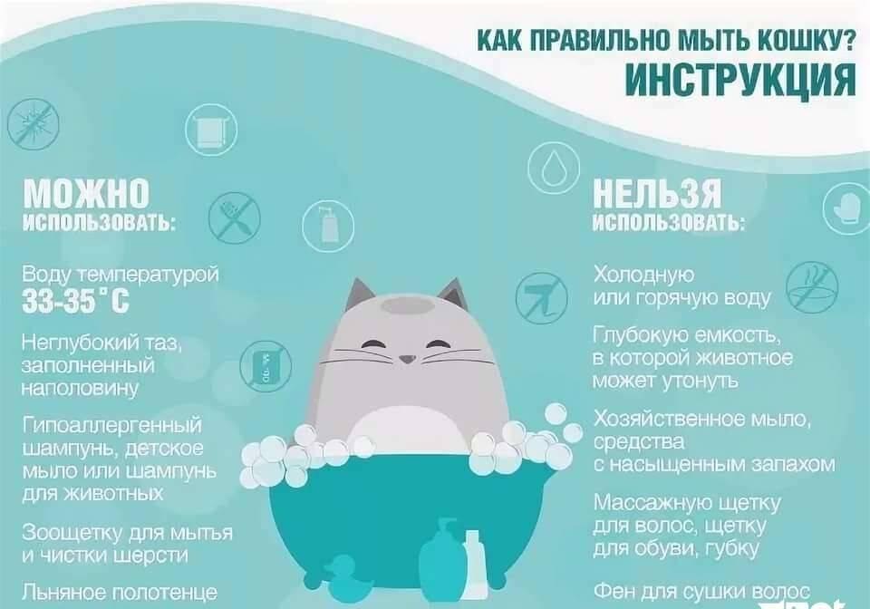 Особенности питания пожилых кошек