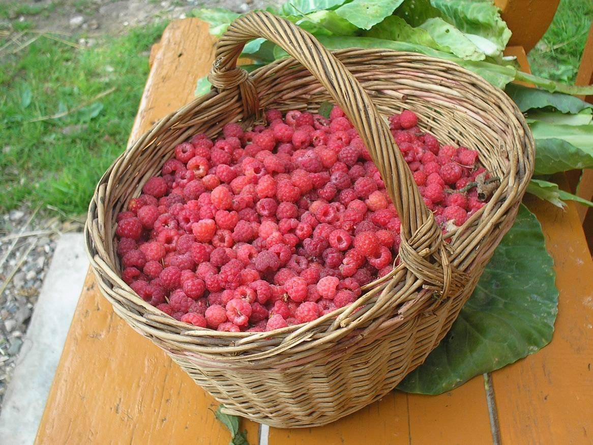 Какие фрукты и ягоды можно собакам | dogkind.ru
