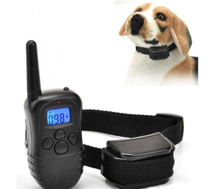 Кликер и электронный ошейник для собак: виды и правила использования, отзывы