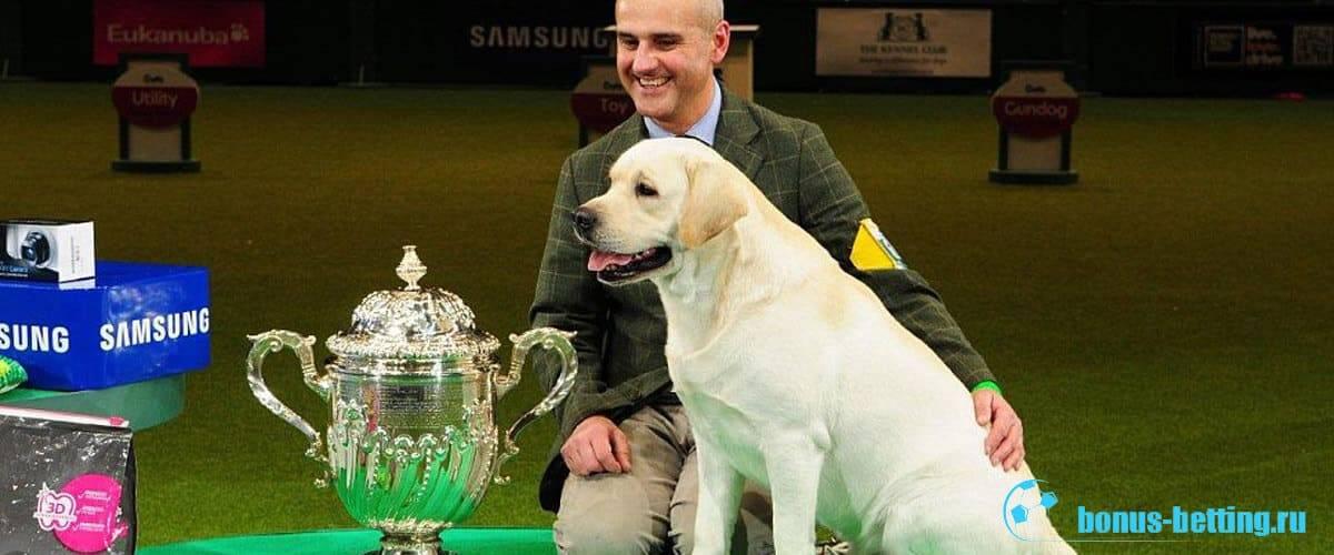 """""""крафт"""" (crufts dog show) – всемирная выставка собак с вековой историей"""