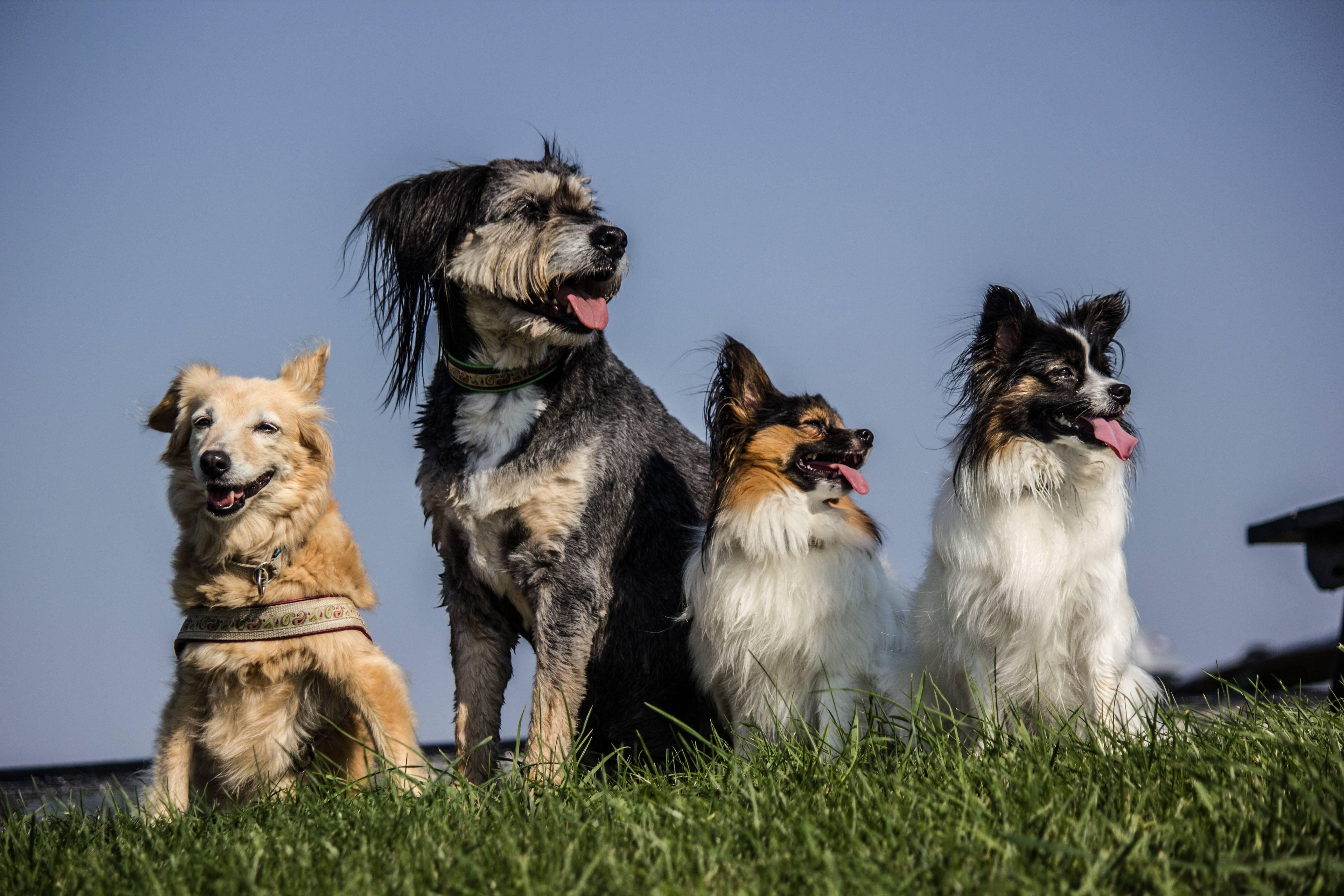 Какие породы собак часто путают между собой - gafki.ru