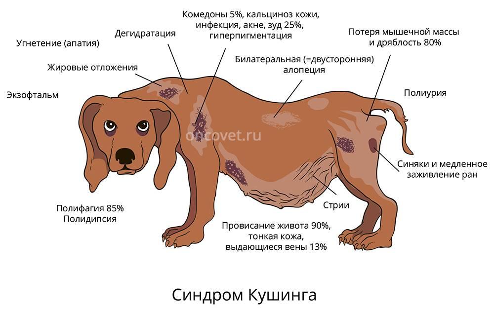 Почему у собаки урчит в животе и как помочь питомцу избавиться от бурления?