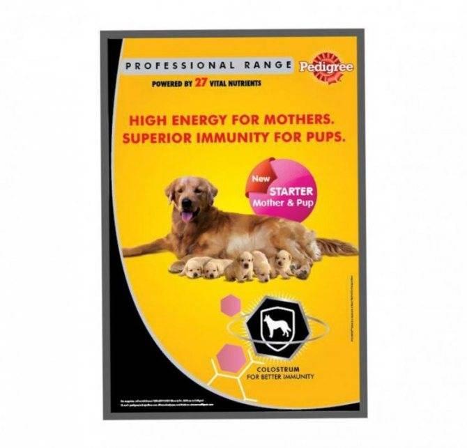 Корма супер премиум класса для собак: список, рейтинг, отзывы