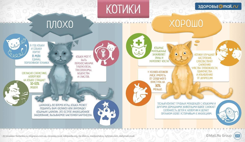 Шесть признаков старения у кошек