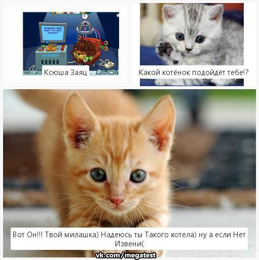 Кот или кошка: кого выбрать и завести?