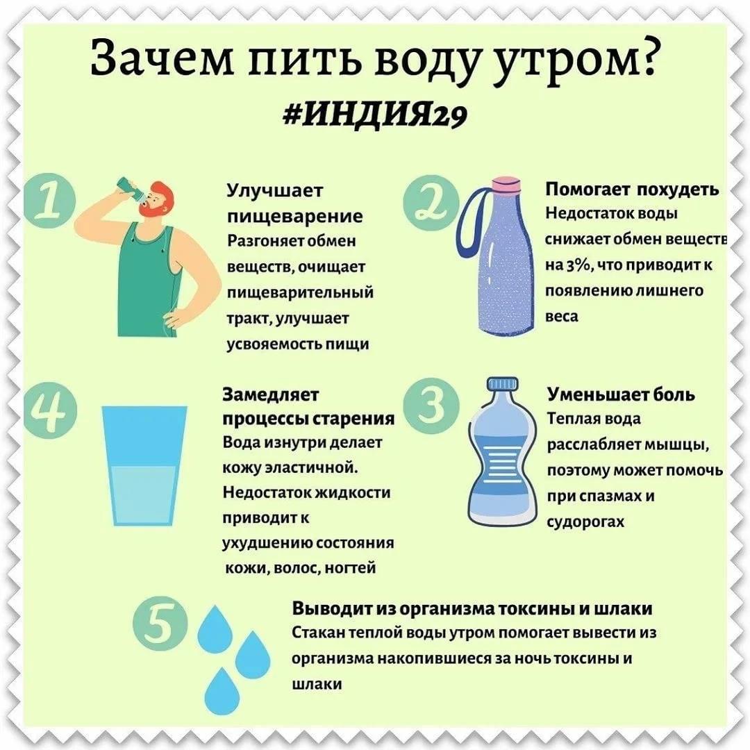 Как заставить кошку пить больше воды - кошка не пьет воду