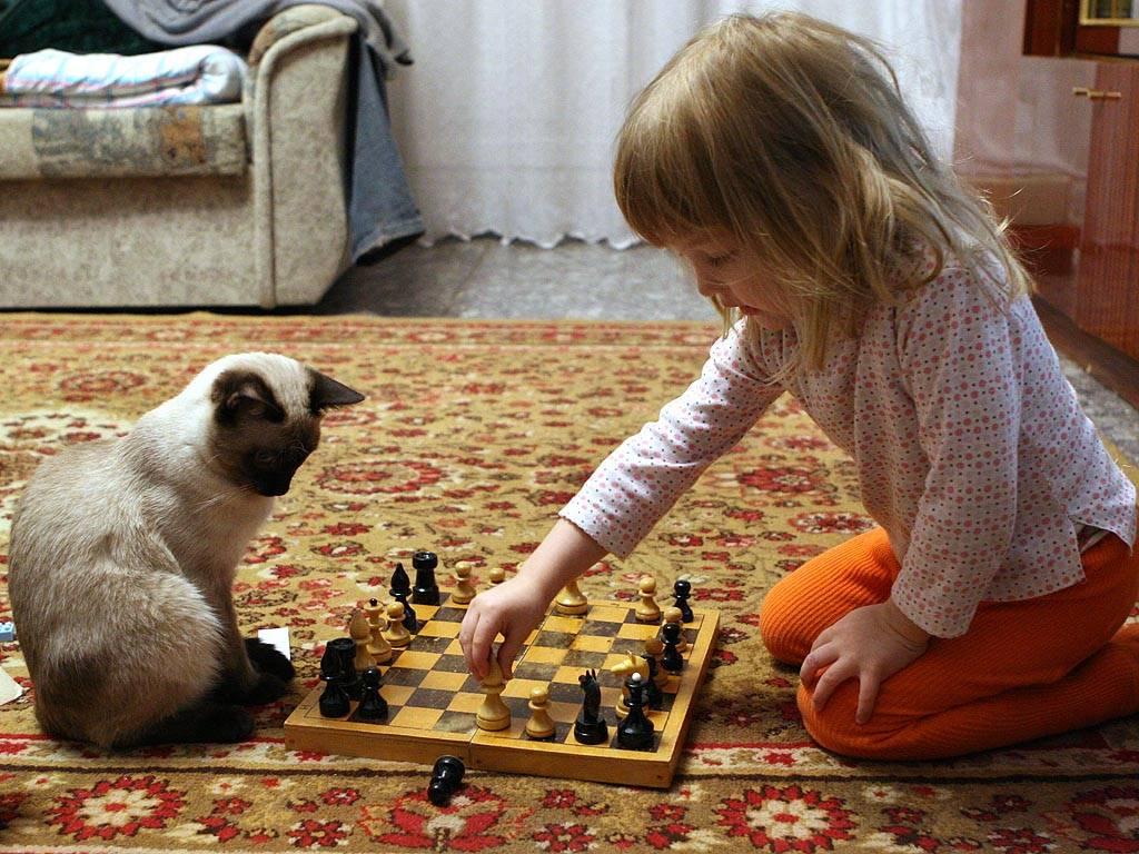 Как играть с кошкой или котом: выбираем интересную игру