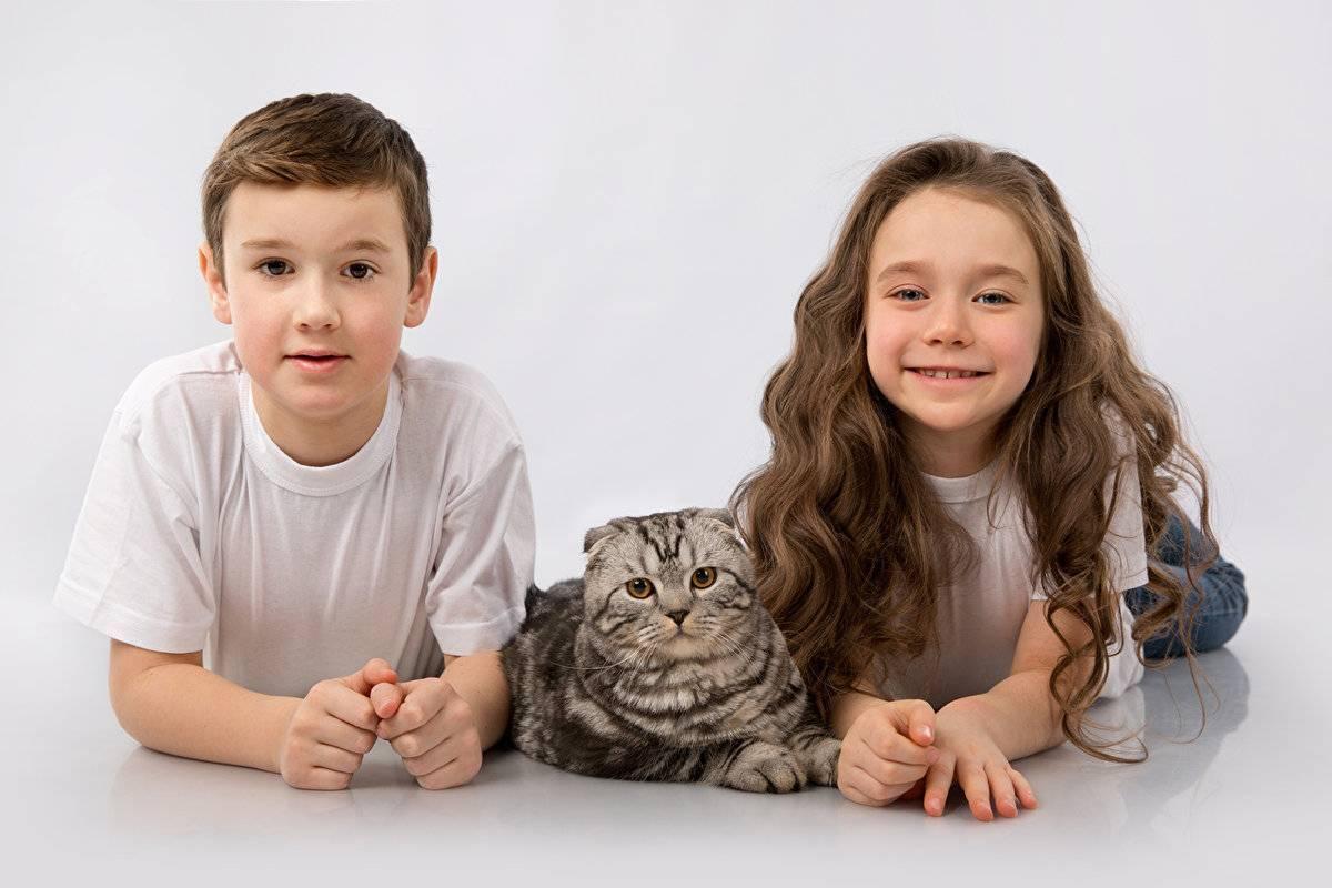 Разберемся, какая порода кошек самая добрая и ласковая | сайт о домашних животных
