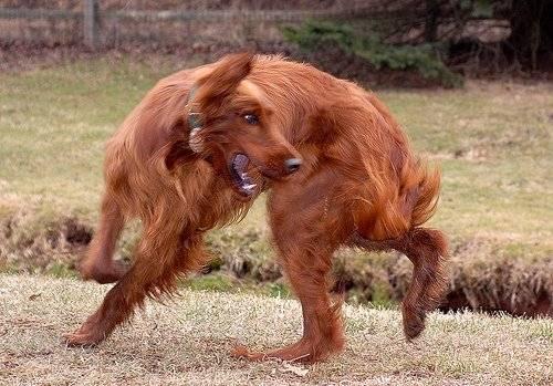 Почему собака кусает свой хвост и нужно ли беспокоится