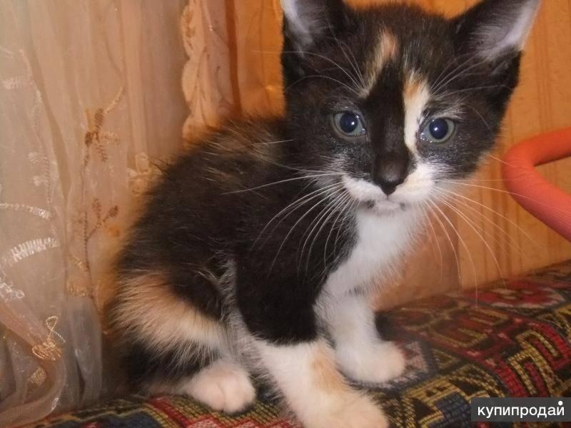 Клички для котят серого цвета