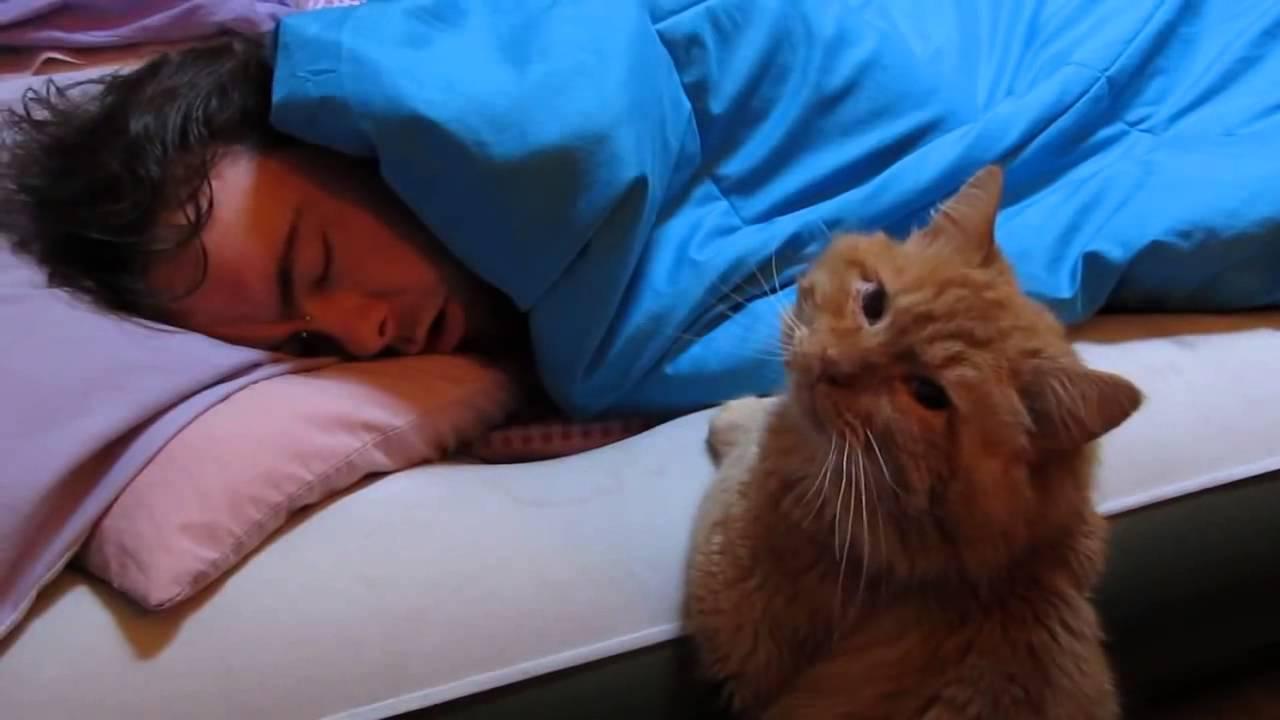 Почему кошка ложится на человека: проявление ласки и другие мотивы