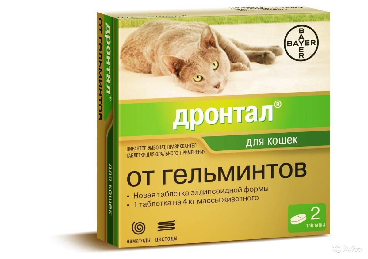 Дронтал для кошек - инструкция по применению лекарства от глистов у кошек, как давать таблетки drontal bayer котятам
