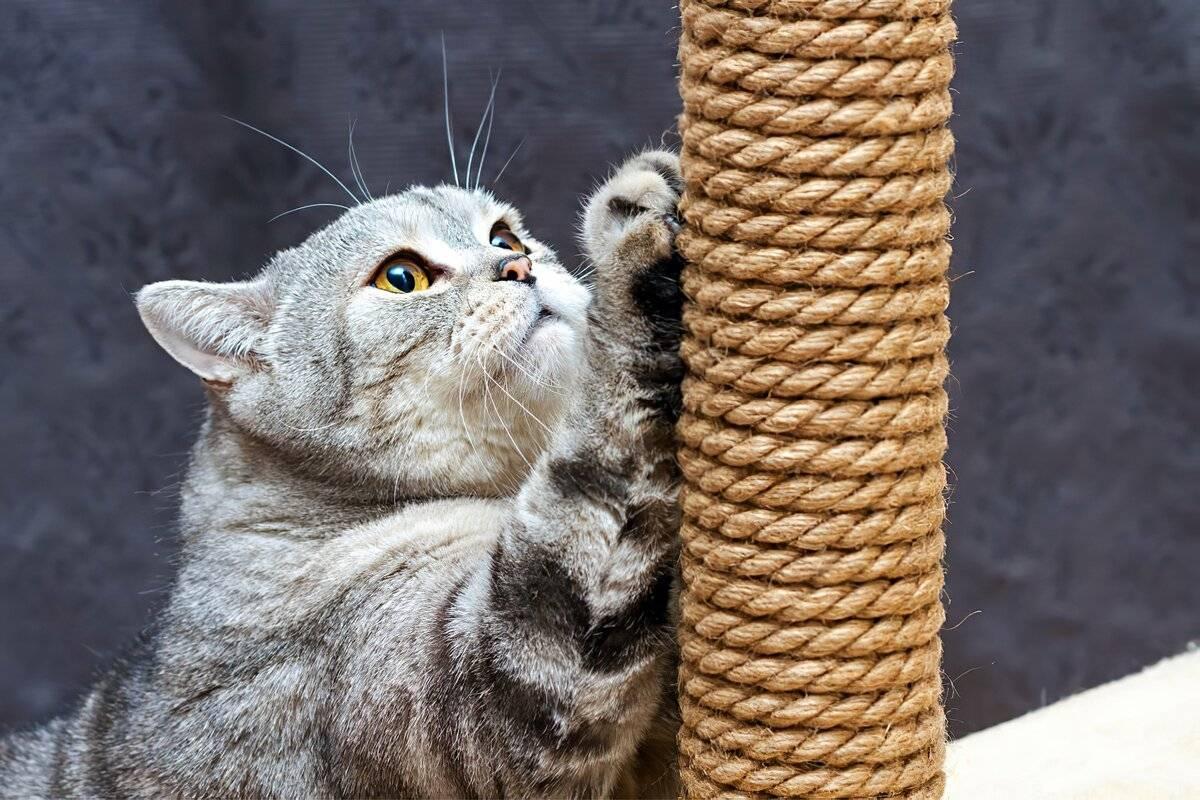 12 ошибок в уходе за котами, которые нужно перестать делать