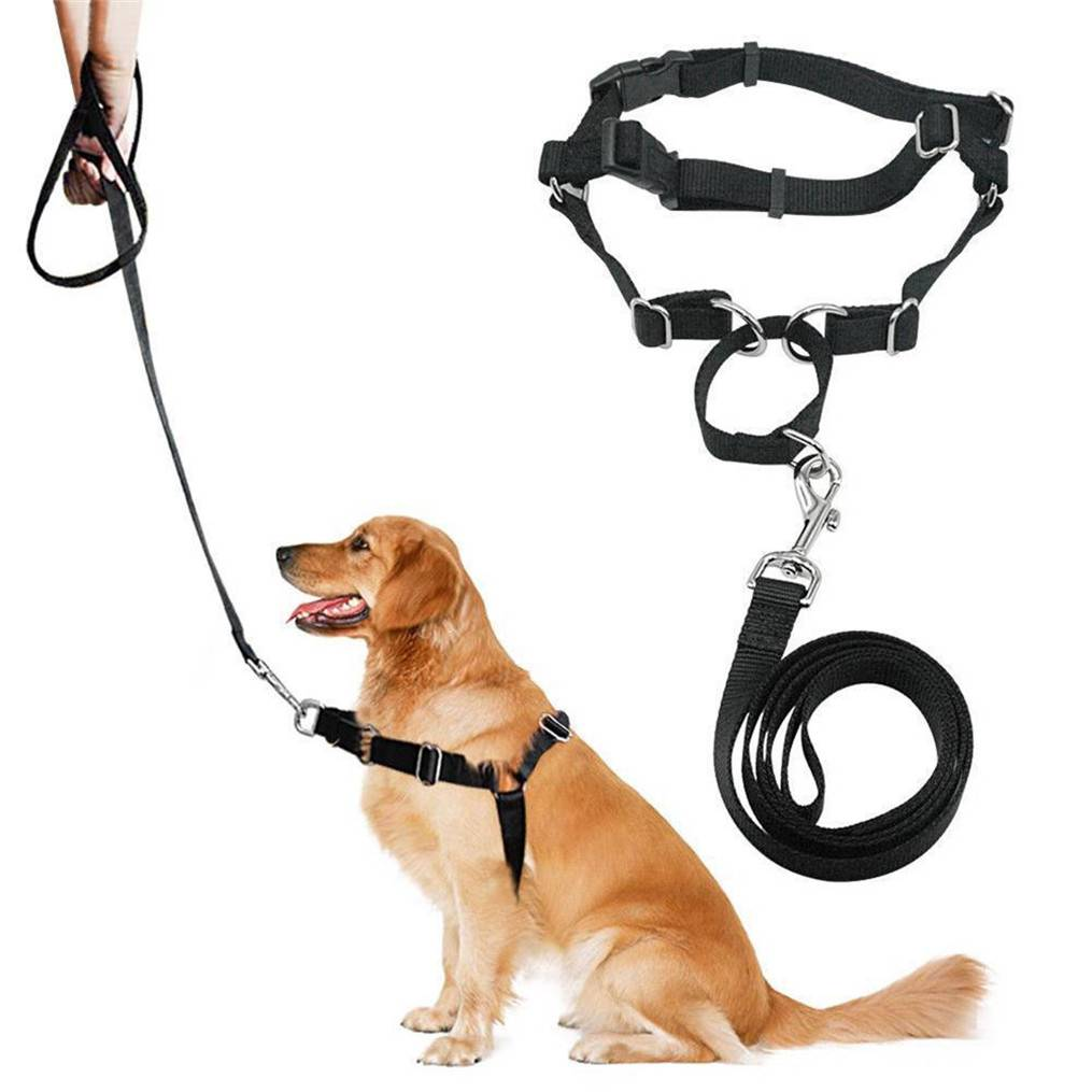 Как отучить собаку тянуть поводок?
