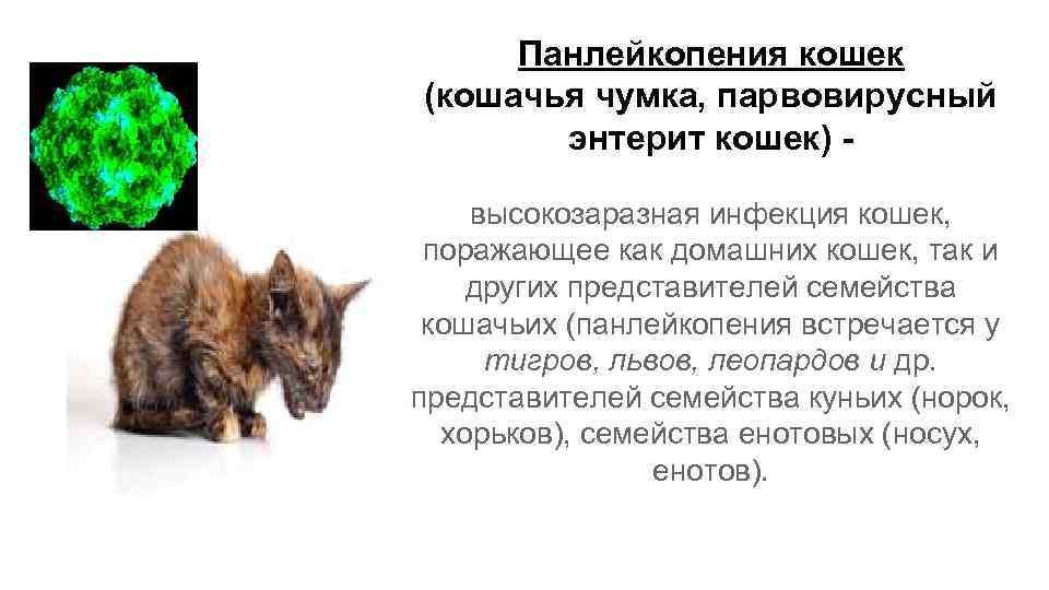 Остеоартроз и артрит у собак и кошек