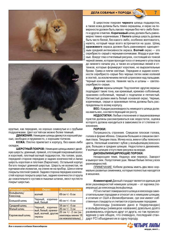 Кеесход: немецкая волчья собака вольфшпиц, описание породы, фото и цены на щенков, характер и размеры взрослых