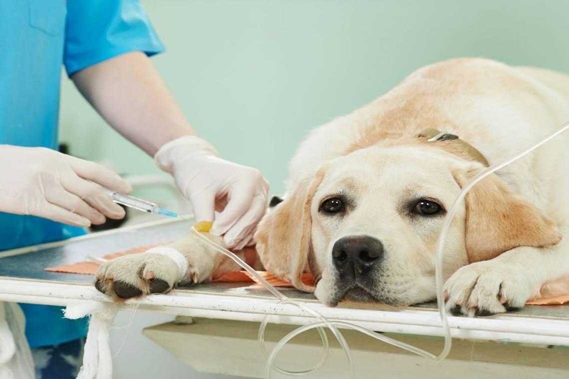 Усыпление животных на дому в санкт-петербурге - от 1 300 руб | вет005