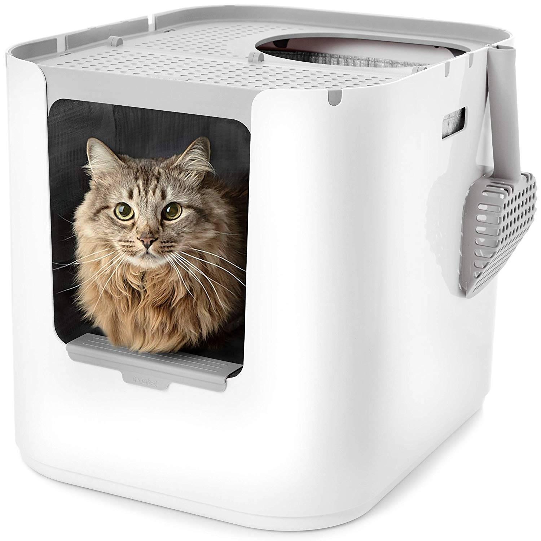 Лучшие лотки для котенка: как правильно выбрать лоток?
