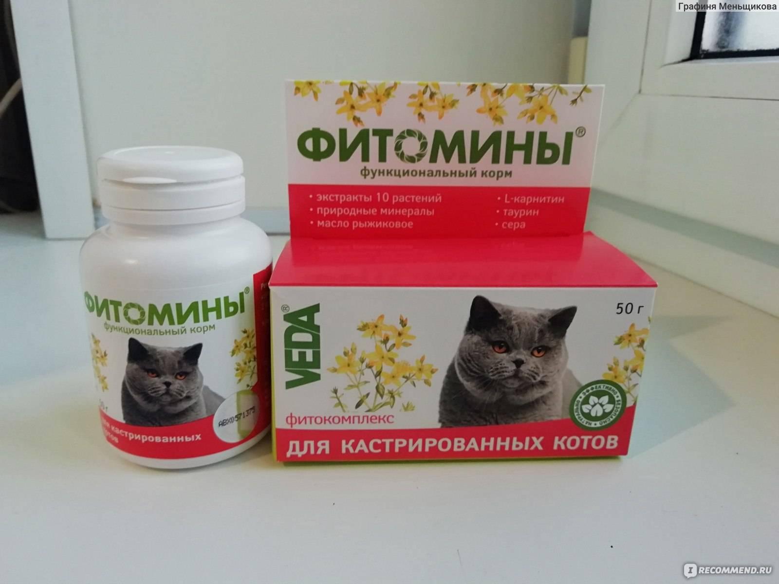 Витамины для котят – какие лучше для здоровья питомца: обзор популярных марок, состав