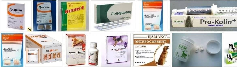 Диарея у домашних животных: причины поноса у животных, диагностика и лечение