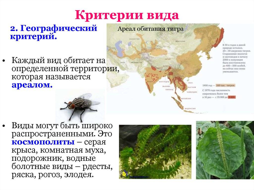 Лесной (дикий) кот: описание внешности, характер, среда обитания и образ жизни, фото
