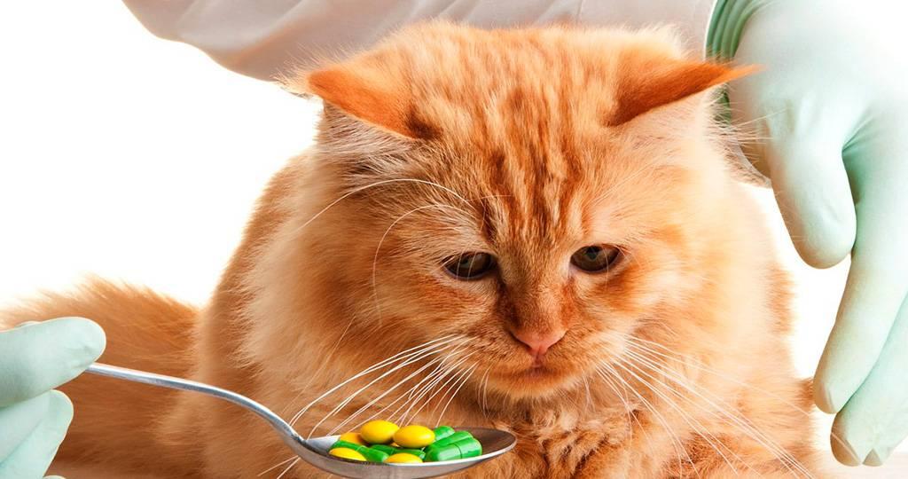 Болезни желудка и кишечника у кошек