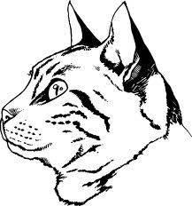 9 способов нарисовать милейших котиков. рисунки кошки карандашом для детей