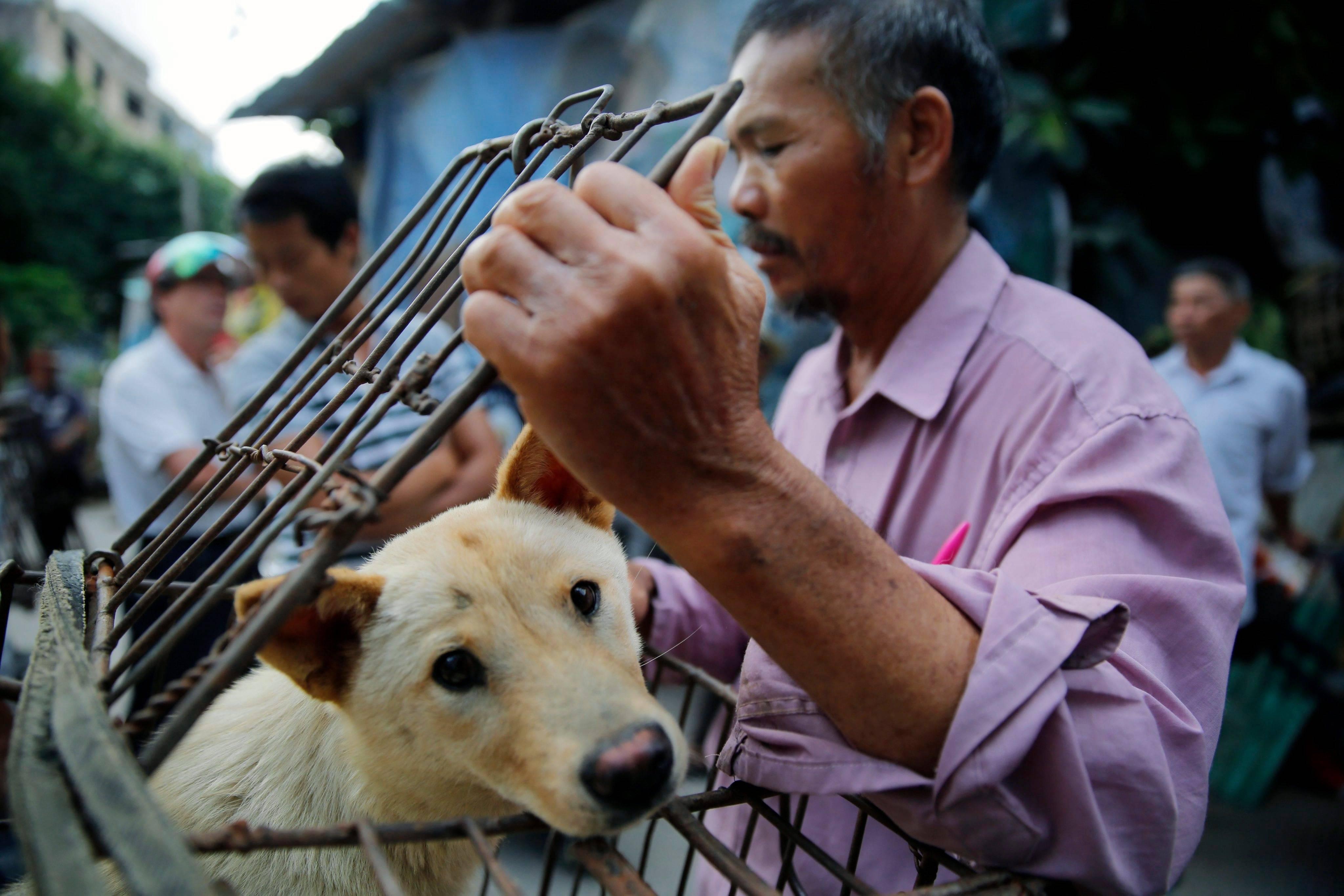 В какой корее едят собак. едят ли собак в северной корее? едят ли в южной корее собак