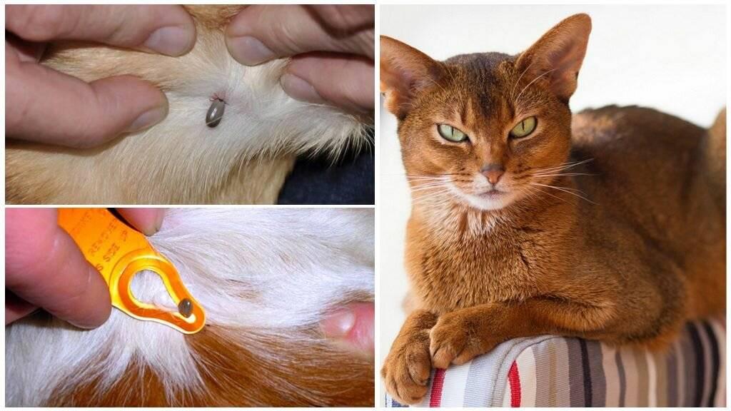Горячие уши у кота: когда нужно волноваться