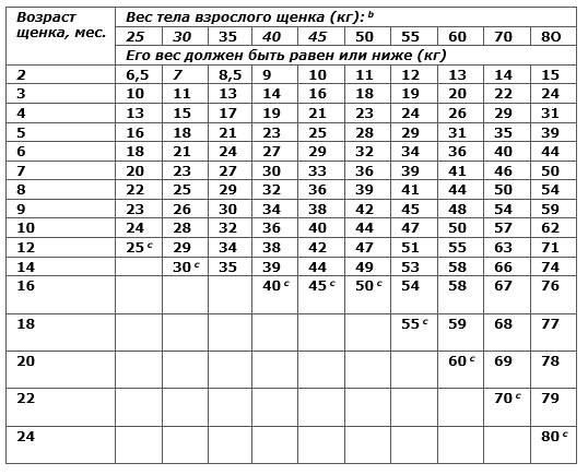 Вес лабрадора по месяцам: сколько весит взрослый